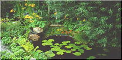 Vijver, aanleggen, ontwerp, ontwerpen, vijvers, tuinvijver, aanleg, uitgraven, diepte, water, soorten, vissen, grootte, folie, vijverfolie