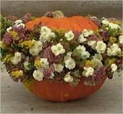 Bloemstuk, pompoen, ajour, geschikt, schikken, bloemen, bloemschikken, sierpompoen, sierfruit, maken, knutselen, bloem, soorten, bloemstukjes, cursus