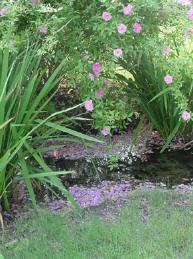 Vijver, onderhoud, moeras, kalender, onderhouden, moeras, voorjaar, winter, najaar, zomer,  vijveronderhoud, vijvers, najaarsonderhoud