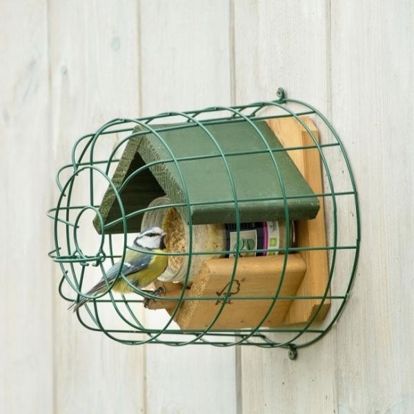 vogels, voeren, voederen, soorten, vogel, mees, meesjes, koolmees, verschil, verschillende, soorten, kijken, eten, geven, water, winter, sneeuw