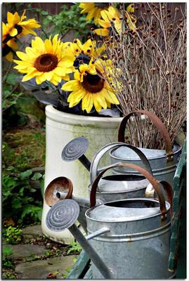 Water geven in de tuin met gieter soorten sproeiers tuinslang druppeldarm watergeefsystemen
