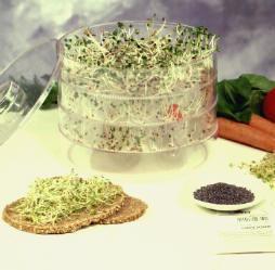 Zelf telen van eetbare kiemzaden of spruitgroenten