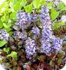 Vaste planten, bloeien, tuin, lenten, doorlevende planten, soorten, snoeien, vermeerderen, bemesten