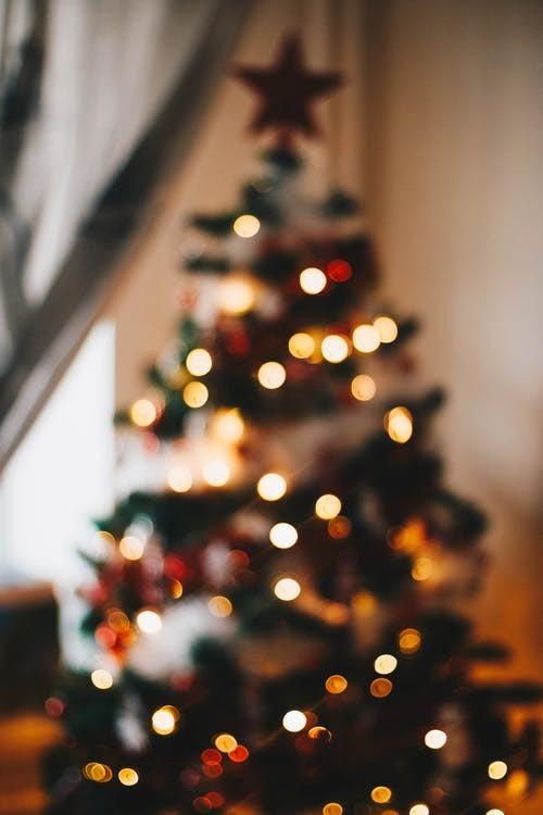 Bomen, Tips, kerstboom, verzorgen, verzorging, water geven, kerstbomen, soorten, kopen, bestellen, mooie, versieren, versiering, naalden, houden, afvallen, vallen af, naald, sparrenaalden, oppotten, pot