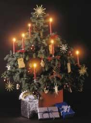 kerstboom, soorten, geschiedenis, kerstbomen, soort, bestellen, kopen, sparren, dennen, kerstspar, verschil