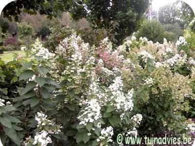 ecologische, planten, tuin, aanleggen, aanleg, tuinieren, sierplanten, plant, aanleg, regio, beplanting, kopen