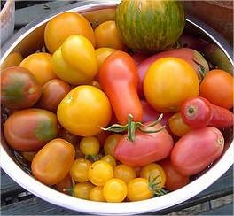 tomaten eten is gezond en zorgt voor kleiner risico op kanker door lycopeen in tomaten gezonde groente