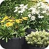 goede plantcombinaties zorgen voor sfeer van balkon of terras kuipplanten terrasplanten keuze makkelijke planten onderhoudsvriendelijke