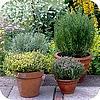 Kruiden in potten of kuipen op het balkon ruiken en smaken lekker planten soorten kruiden