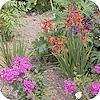 foto tuin maken fotograferen van planten tips voor mooiere foto's van bloemen en planten
