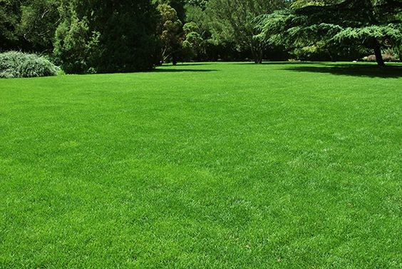 gras, zaaien, gazon, aanleggen, aanleg, onderhoud, bemesten, inzaaien, verzorging, herfst, lente, gras, najaar, onderhouden, weer