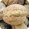 Okkernoten juglans geneeskundig gebruik en recepten met okkernoten in de keuken soorten noten tips