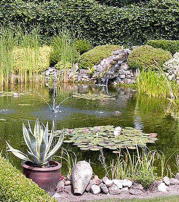 soorten waterplanten voor de vijver, moeras, waterpartij, drijfplanten, waterzuiverende planten, waterplantjes soorten