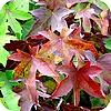 Bladeren verkleuren in de herfst in allerlei mooie kleuren aan de bomen bladkleuren rood gele tinten soorten