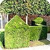 Hagen voor de tuin met buxus, taxus en andere sierheesters als windbrekers, privacy en schoonheid
