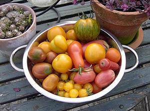 tomaten, tips, vruchten, bewaren, vlekken, verwijderen
