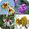 heesters, struiken, planten, winter, kleur, bessen, tuin, herfst, struik, sierheester, wintergroen
