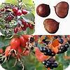 Eetbare bomen en struiken zoals appelbes, beredruif, braam, duindoorn, dwergmispel, gele kornoelje, Japanse kwee,...