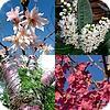 Prunus is een zeer groot en gevarieerd geslacht, met bladverliezers en groenblijvers; met heesters en bomen.