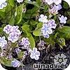 plantengids, Nieuw tuinadvies, online plantengids, 1300 planten, bloemkleur, hoogte, soort gewas, winterhardheid, bloeimaand
