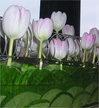 tulpen, schikken, groeien, door