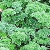 Kruiden drogen, langer bewaren en gebruiken in allerlei gerechten,...