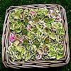 Hortensia, snoeien, bloemen, maken, bloemstukje, zaaddozen, papavers, hortensia's, struik, hydrangea