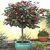 Struiken, bomen planten, potten, terras, balkon, soorten bomen, struiken, grote kuipen, snoeien, plant, kopen