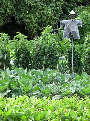 Zaaien moestuin, planten, oogsten groenten, augustus, groententuin, serre, soorten groenten, zaaien, tuin, hobbyserre