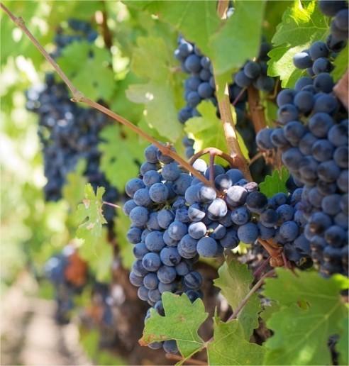 tuinkalender, oktober, tuinieren, bloemen, planten, stekken, tuin, werken, wijnmaand, klussen, kalender, tuinen, tuin, onderhoud, tuinonderhoud