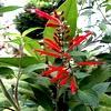 tuin, winterklaar, maken, november, december, herfst, najaar, opruimen, planten, snoeien, kuisen, opkuis, netjes, mooi, proper
