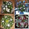 advent, krans, kransen, maken, bloemstuk, adventsstuk, bloemstuk, kaarsen, geschiedenis, oorsprong, datum, start, begin, aanvang, wanneer