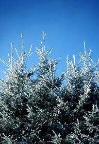 weerspreuk, weer, december, winter, kou, sneeuw, zegswijze, spreuk, nat, sneeuw, spreekwoorden