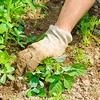 geld besparen, tuin, tuinaanleg, onderhouden, rijshout, planten, goedkoop, wieden, onkruid, verdelgen