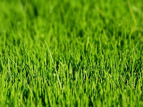 mos bestrijden, gazon, verdelgen mos, mosbestrijding, compost, zaaien gras, bemesten, verticuteren