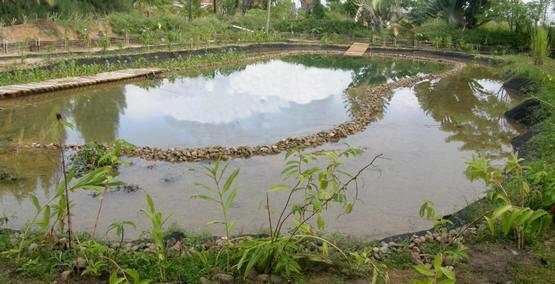 zwemvijver, aanleggen, vijver, natuurlijke, biologische vijver, filters, vijverfilters, zwemmen