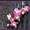 bloemschikken, orchidee, phalaenopsis, koffieriet, besjes, bloemstuk, maken, voorbeelden, bloemstukken