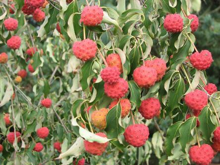tuinklussen, september, tuin, kalender, tuinieren, online, overzicht, hobby, oktober, herfst, vijver, moestuin, groenten kweken, serre