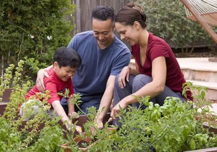 Bloembollen planten, bloembollen uitplanten, wanneer bloembollen planten, bewaren van bloembollen, bloembollen informatie, soorten bloembollen, bloembollen kopen, bloembollen poten