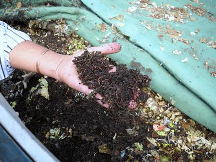 wormenbak, composteren met wormen, zelf een wormenbak maken, bak met wormen compost