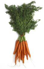 teelt wortelen, busselwortelen, soorten, zaaien, bemesting wortelen, rassen, serre, kas, kopen, zaden, oogsten