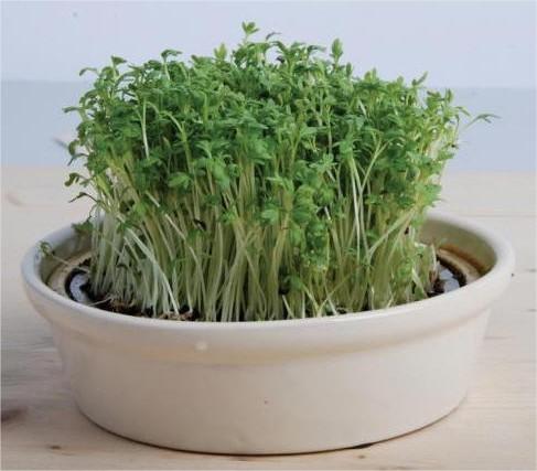 tuinkers, zaden, zaaien, kopen, te koop, kiemgroente, kiemschaal, kiemset, kweekschaal