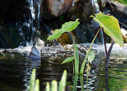 vijver opstarten, vijver opstart, vijverbacteri�n, waterfiltrering, vijver opstarten na de winter, vijver opstarten in het voorjaar