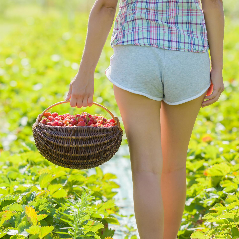 Zelf aardbeien kweken, bewaren aardbeien, aardbeirecepten, zomerfruit, aardbeiteelt in eigen tuin