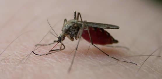 Steekmuggen, muggen verjagen, verspreiding van muggen, muggen steken, muggenbeet