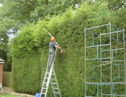 Snoeien coniferenhaag, soorten hagen snoeien, snoeitips voor hagen, soorten hagen