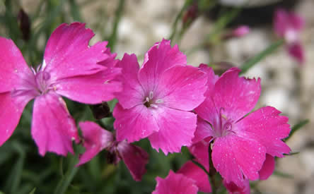 Geurende bloemen, geurende planten, bloemen aroma's, aangename tuingeuren