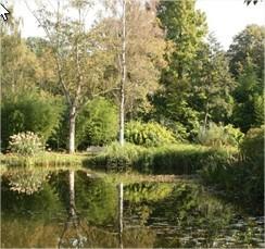 arboretum van Kalmthout, herfst in het arboretum, uitstap naar kalmthout