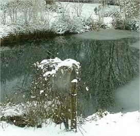 De vijver en de vissen in de winterperiode.