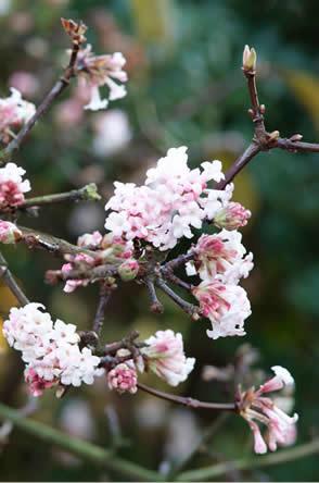 wintermooi met winterse bloemen, Winterbloeiers: wintermooi met winterse bloemen - bloemen die in de winter bloeien